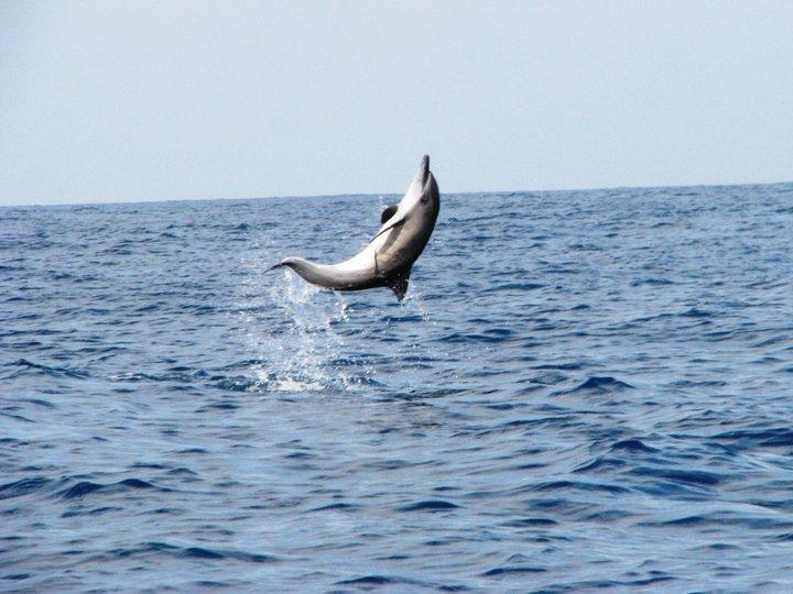 Pulau Kiluan Dijual, Wisata Lumba-lumba 4