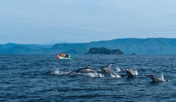 Pulau Kiluan Dijual, Wisata Lumba-lumba 5