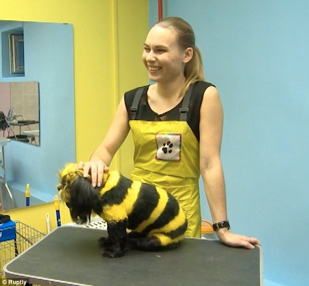 Anjing Lebah Madu yang Lucu