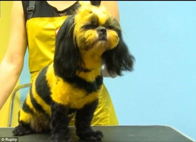 Raut Muka Anjing Lebah Madu ini Terlihat Bete, Lucu juga hihi