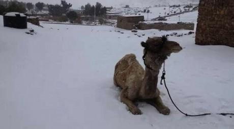 Hujan Salju di Kairo Mesir