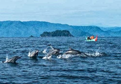 Pulau Kiluan Dijual, Wisata Lumba-lumba 2
