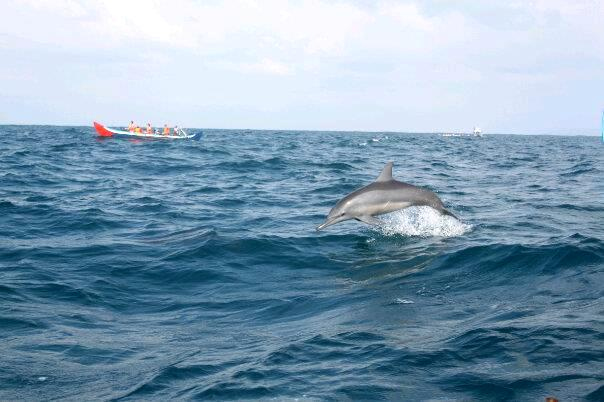 Pulau Kiluan Dijual, Wisata Lumba-lumba 3