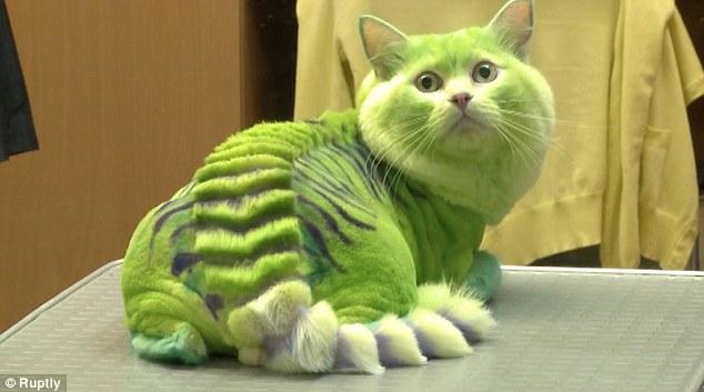 Kucing Naga Hijau
