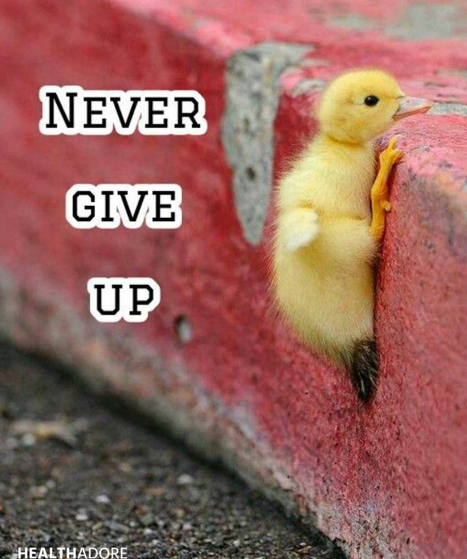 Ayam ini aja berjuang keras dan pantang menyerah