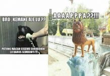 Ekspresi Kaget dan Panik - Meme Adik Macan Cisewu