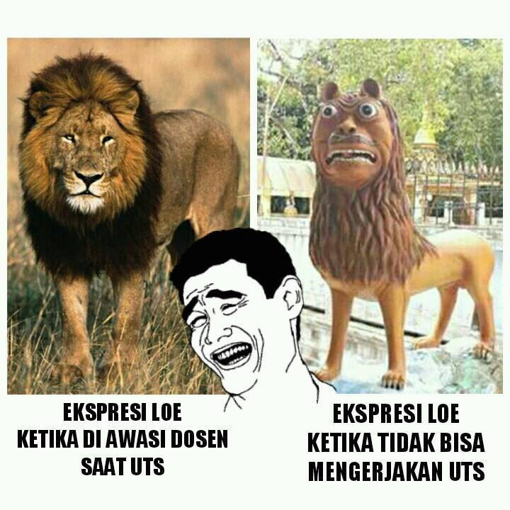 Hahaha, Kicep - Meme Adik Macan Cisewu