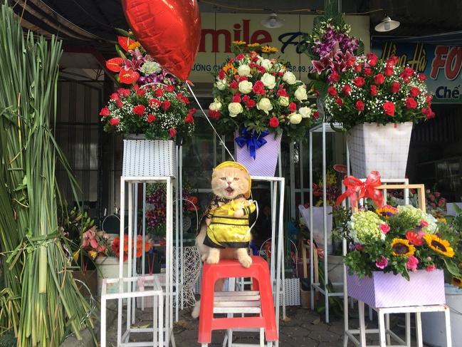 Aksi Cho Saat Menjaga Dagangan Bunga