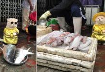 Cho Kucing Asal Vietnam yang Sempat Viral Karena Jaga Ikan