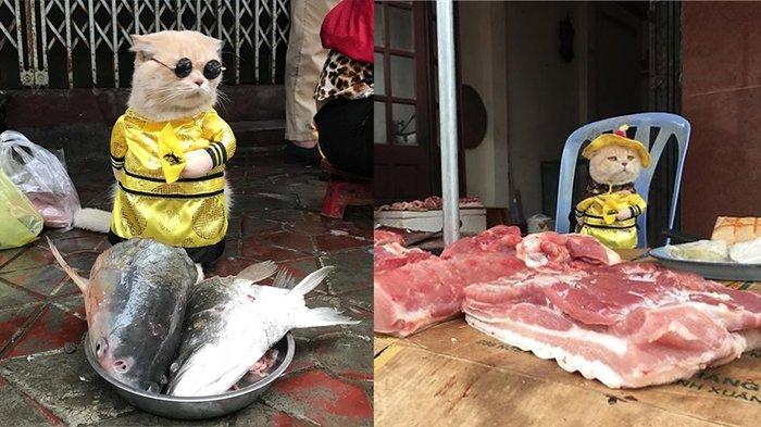 Cho Kucing Lucu yang Sedang Viral