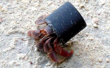 Manusia menjadikan cangkang keong sebagai kerajinan tangan seperti gantungan kunci, kalung dan gelang