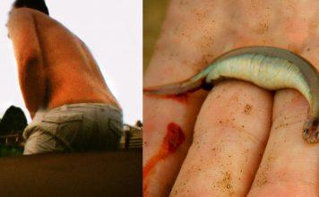 Ikan Candiru atau bisa disebut ikan vampir dari Brazil