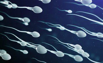 Rasa Sperma